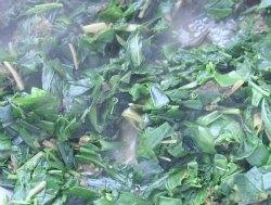 green leaves boil