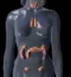 Human Body Endocrine Hormones