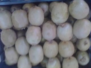 Green Kiwifruit raw