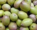 olive vanadium